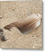 Feather On The Beach Metal Print
