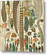 Feather Plumes-a Metal Print