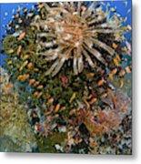 Feather Star (crinoidea Metal Print