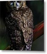 Feathered Beauty Metal Print
