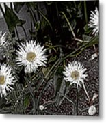 Feathered Daisy  Metal Print