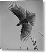 Feathered Flight  Metal Print