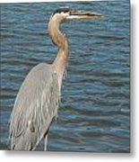 Feathered In Blue Metal Print