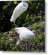 Feathers In A Twist Metal Print
