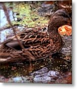 Feathers In Autumn Metal Print