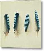 Feathers No1 Metal Print