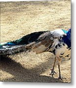 Feathers Of Many Colors Metal Print