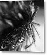 Feathery Drop Metal Print