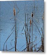 February Cattails Metal Print