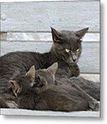 Feeding The Kittens Metal Print