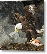 The Ultimate Bald Eagle Metal Print