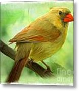 Female Cardinal In Elm Tree - Digital Paint Metal Print