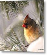 Female Cardinal Nestled In Snow Metal Print