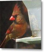 Female Cardinal Metal Print