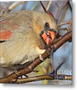 Thorns And Berries - Cardinal Metal Print