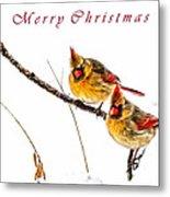 Female Cardinals Card Metal Print