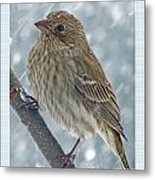 Female House Finch In Snow Metal Print