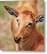 Female Impala Metal Print