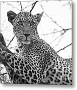 Female Leopard Metal Print