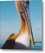 Female Pelican Metal Print