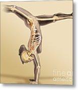 Female Skeletal System Metal Print