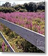 Fence And Purple Wild Flowers Metal Print