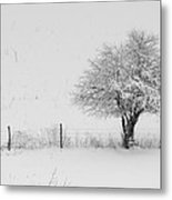 Fence Line In The Wintertime  Metal Print