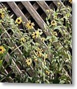 Fence Lined Wildflowers Metal Print