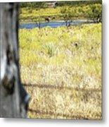 Fence Pasture Horse 14419 Metal Print