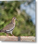 Fence Walker Metal Print