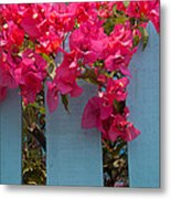 Fence With Bouganvillia Metal Print