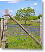 Fenced-in Beauty Metal Print by Lynn Bauer