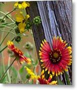 Fenceline Wildflowers Metal Print