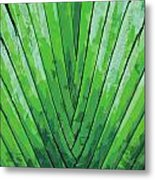 Fern - Color Marker Metal Print