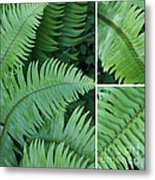 Fern Collage Metal Print