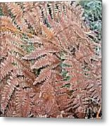 Fern Frond Frosted Metal Print