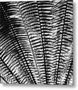 Fern Frond Metal Print