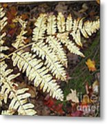Fern In The Forest Metal Print