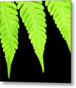 Fern Isolated On Black Background Metal Print