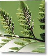 Fern Seeds Metal Print