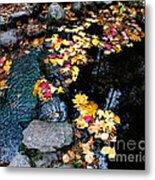 Fern Spring Yosemite Metal Print