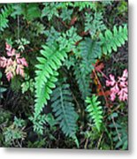 Ferns Along The Columbia River Metal Print