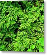 Ferns And Fauna Metal Print by T C Brown