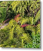 Ferns And More Metal Print