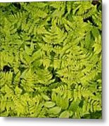 1m2436-ferns At The Base Of Mt. Robson  Metal Print