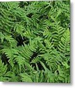 D3b6327-ferns In Sonoma Metal Print