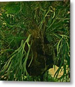 Ferns In The Jungle Room Metal Print