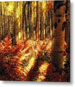 Ferns On The Forest Floor Metal Print