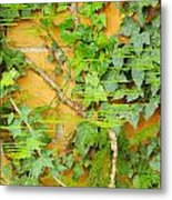 Ferns Vines And Lines 2am-112099 Metal Print