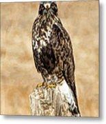 Ferruginous Hawk Metal Print